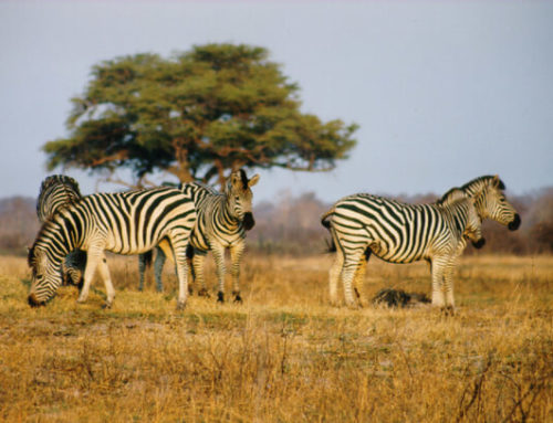 Four reasons you should hop on a plane to Zimbabwe right now